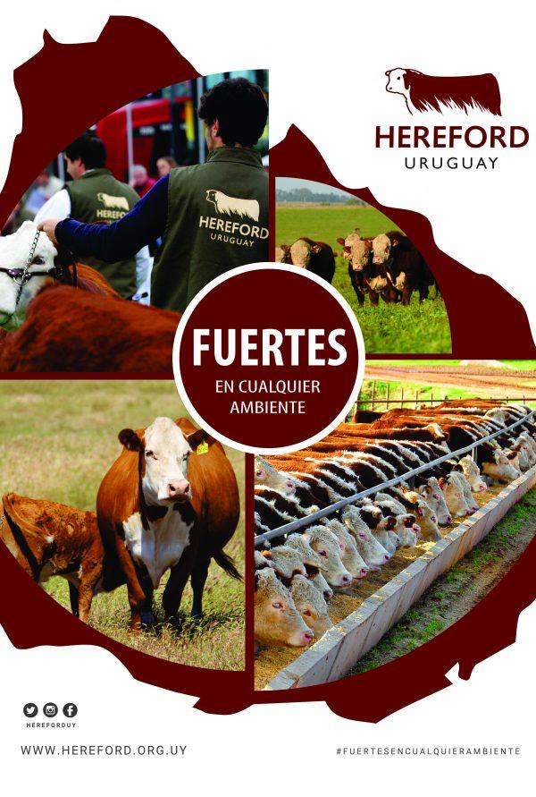 Hereford – Anuncio Publicitario